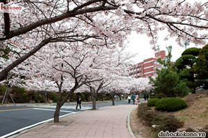 Điều kiện Để Du Học Hàn Quốc -  3 Chiếc Chìa Khóa Vạn Năng