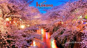 Dac trung van hoa tokyo - Le hoi hoa anh dao - Kokono